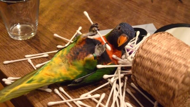 Funny Parrots Going Crazy - Funniest Parrots Compilation 2020