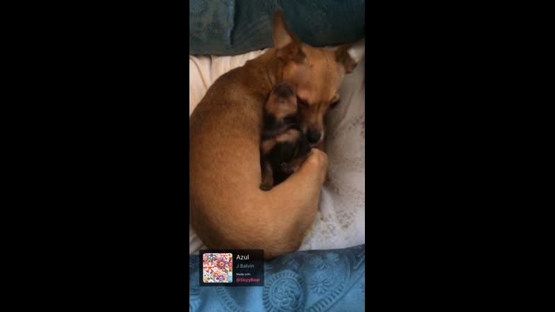 Busa Her Puppy