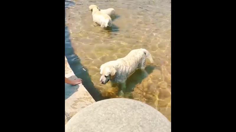 Сибирская жара Купание собак